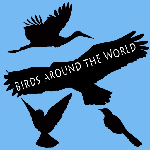 Birds Around the World