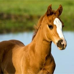 Pony Slider Puzzle HD