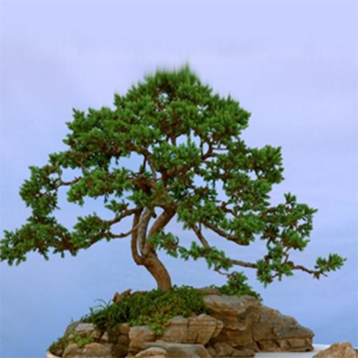 Bonsai Tree - The Art of Growing Bonsai Trees