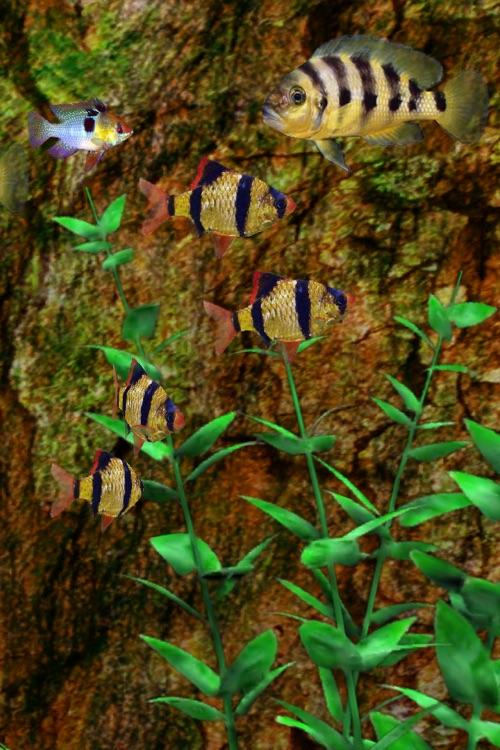 Tropical Aquarium screenshot-4