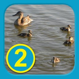 At The Pond - Level 2(B) - Learn To Read Books
