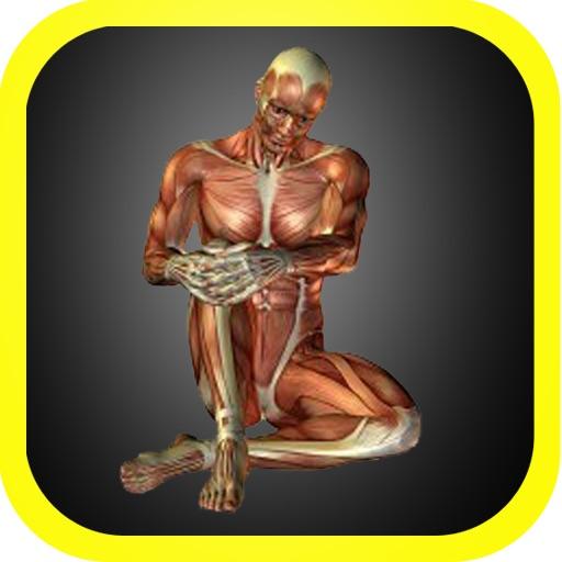 3D Visual Body Anatomy