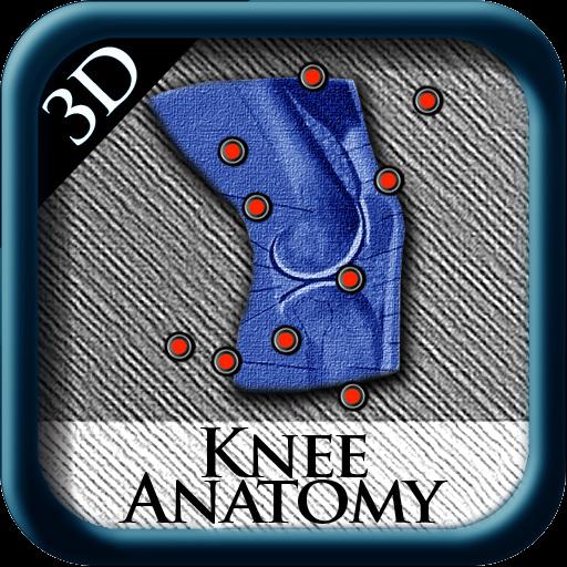 Knee Anatomy 3D