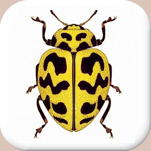 Entomology Dictionary