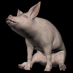 Piano Pigs Free