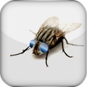 JumiFly – A fake fly turns into an addictive fun prank to play on the PC desktop / background