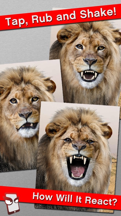 AngryZoo Free - The Angry Zoo Animal Simulator