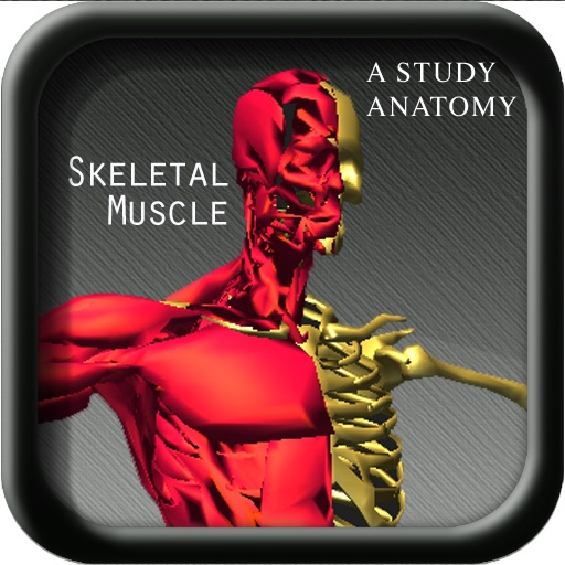 A Study Anatomy Skeletal Muscle SH