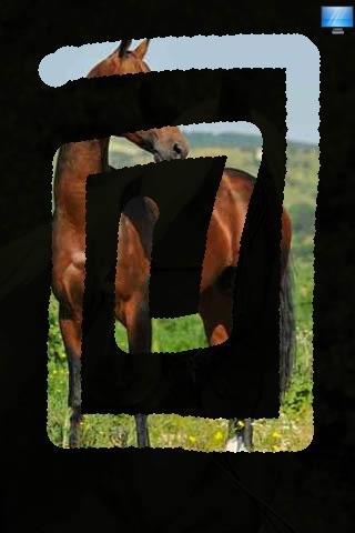 Lovely Horses screenshot-3