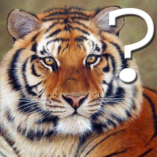 A Wild Cats Quiz
