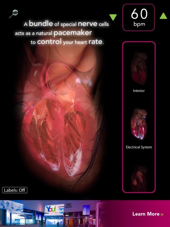 Virtual Heart