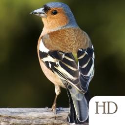 Bird Identifier HD