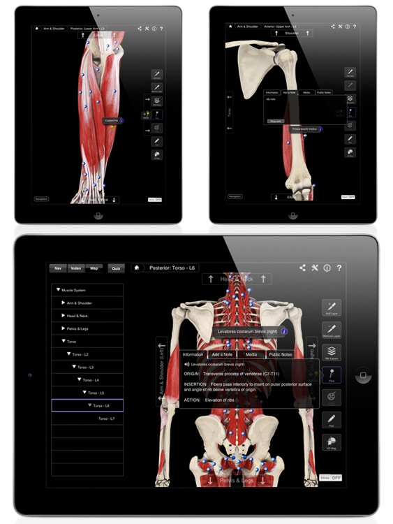 Muscle System Pro III screenshot-4