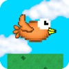 Bitty Bird