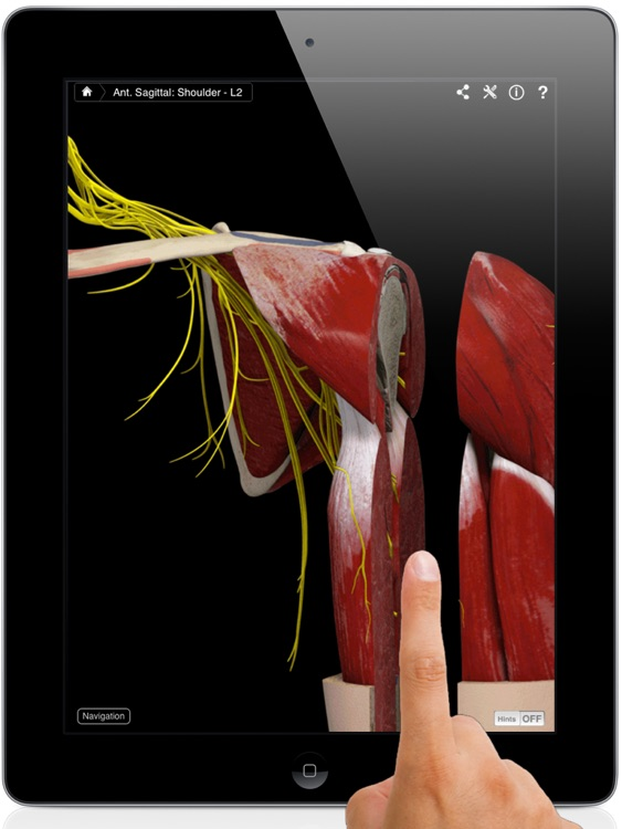 Shoulder Pro III for iPad screenshot-0