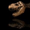 Dinosaur Encyclopedia - scott hotaling