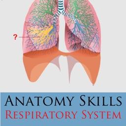 Anatomy Skills - Respiratory System