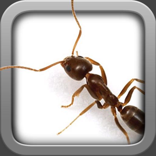 Ant Life