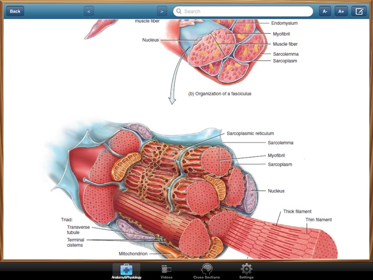 Anatomy and Physiology screenshot-2