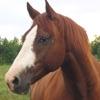 My Pet Horse Reviews