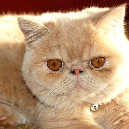 Cat Annoyer