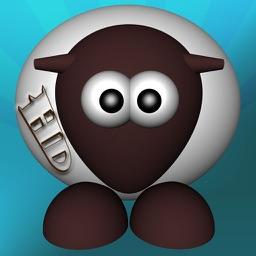 Sheep Herd HD
