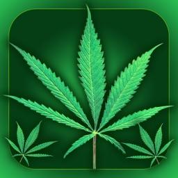 Weed Yo Screen