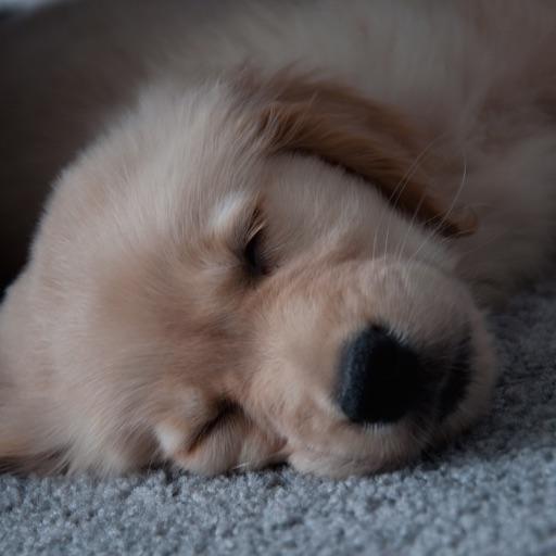 dog clock - clock for dog lovers -