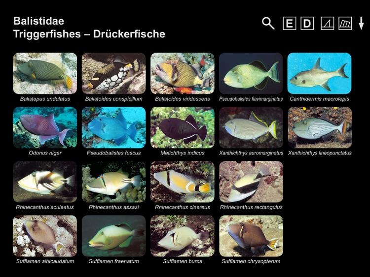 Helmut Debelius: Indian Ocean & Red Sea Fish Guide
