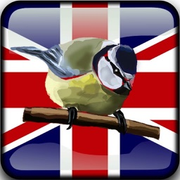 Birds of Britain