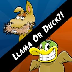 Llama Or Duck?!