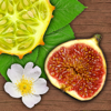 Exotische Früchte und Gemüse - NATURE MOBILE