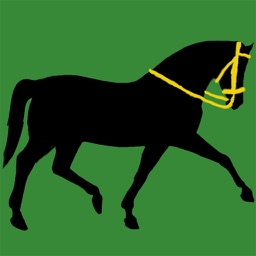 Horsey How 2 Bridle
