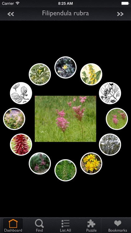 Medicinal Plants Encyclopedia Pro
