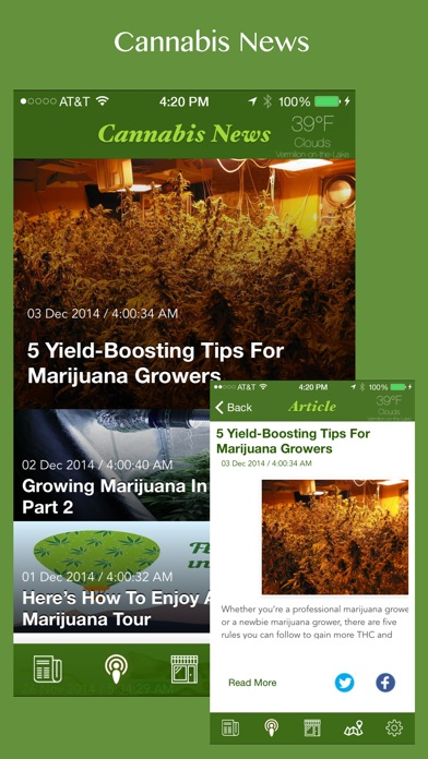 Cannabis News (FREE EDITION)