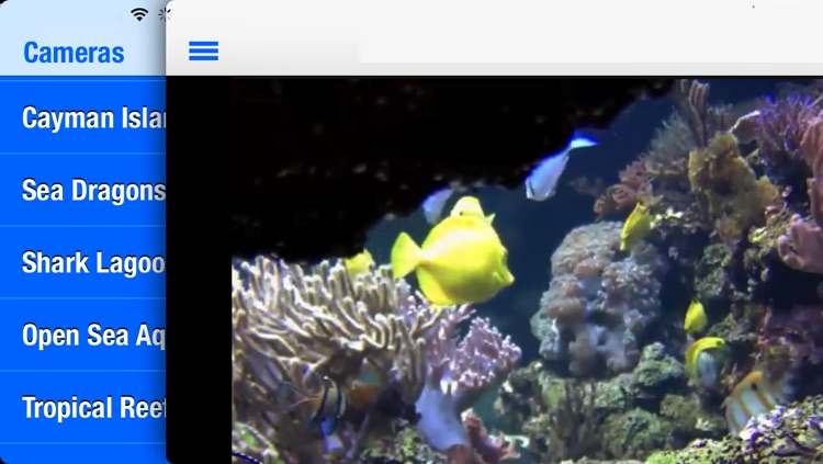 Real Underwater Live Streaming Cams