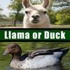 Llama or Duck - iPhoneアプリ
