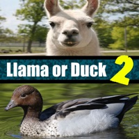 Codes for Llama or Duck Quiz 2 Hack