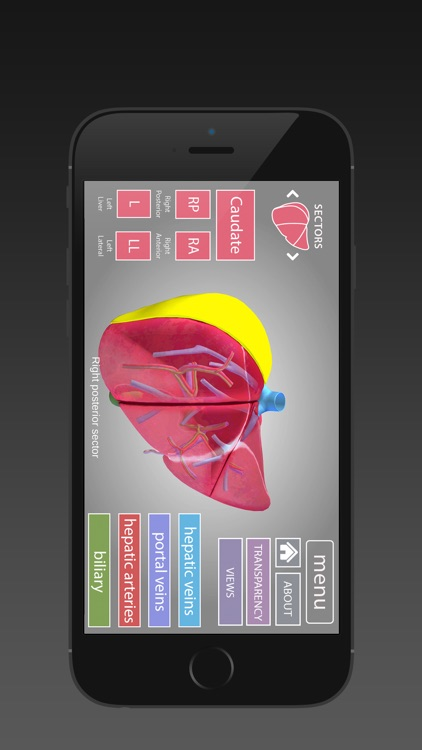 Surgical Anatomy of the Liver (iPhone) screenshot-4