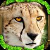 Cheetah Simulator - Gluten Free Games Cover Art