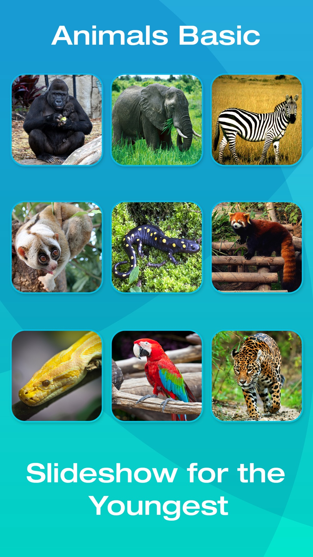 Safari and Jungle Animal Picture Flashcards for Babies, Toddlers or Preschool (Free) hack tool