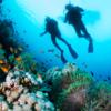 Buceo - increíble mundo submarino