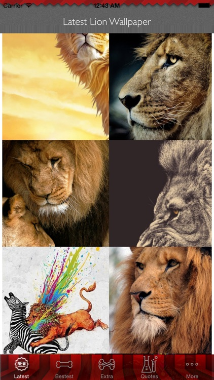Best HD Lion Art Wallpapers For IOS 8 Backgrounds: Wild