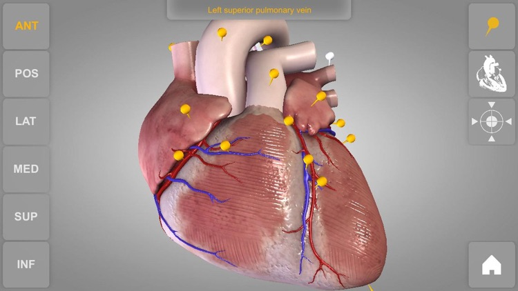 Heart - 3D Atlas of Anatomy Lite screenshot-0