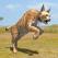 Lynx Survival Simulator