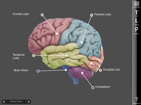 3D Brain Screenshot 0