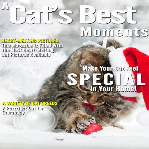 A Cats Best Moments