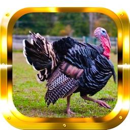Turkey Hunting: Big Game Trophy Hunter