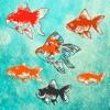 雨降る池の金魚育成ゲーム:3D放置ゲーム