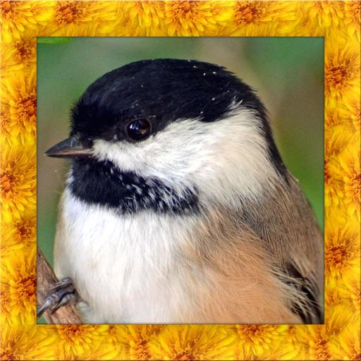 Chickadee Bird Simulator
